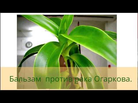 Лечение рака по методу Огаркова.