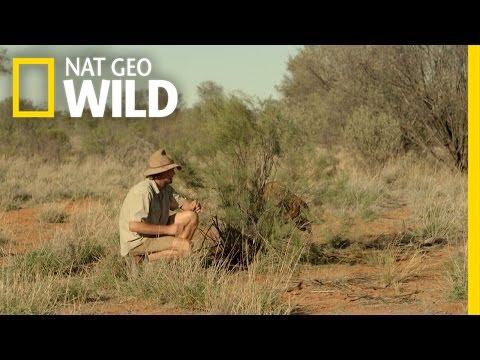 Raging Roger the Kangaroo | Kangaroo Dundee