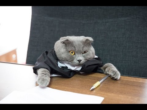 The first company in the world to hire a cat as a manager