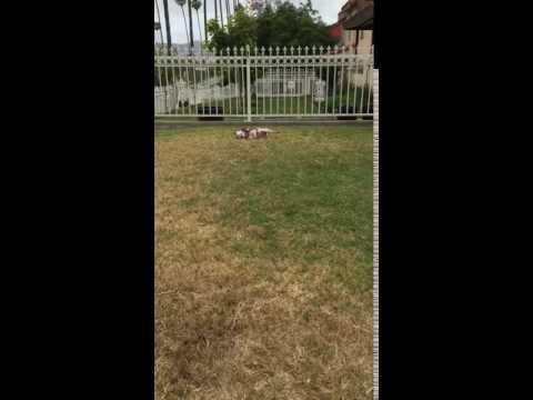 Dog paralyzed after Century Vet Visit