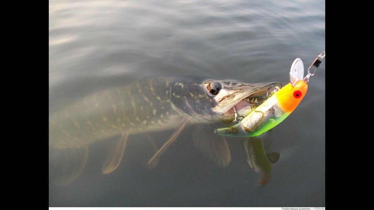 рыбалка на воблеры на течении видео