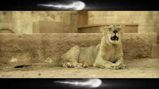 John Abraham & Varun Dhawan Face A New Problem | Dishoom | Dialogue Promo