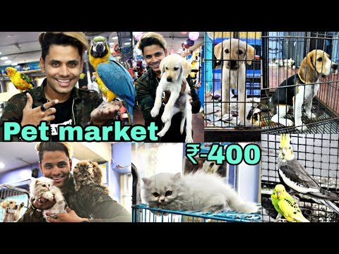 Pet Market in Hyderabad  | Dogs For sale | Persian cats | Bi