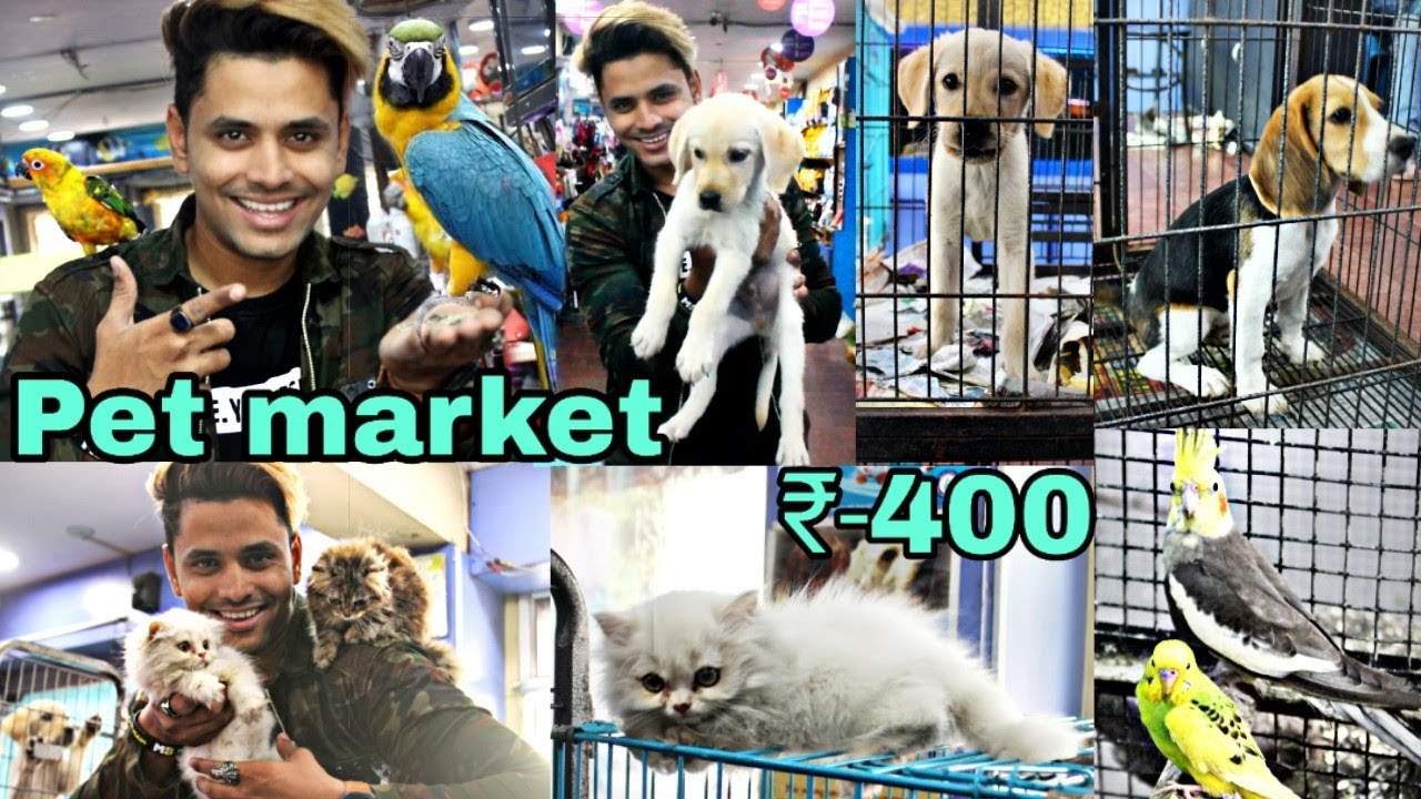 Pet Market In Hyderabad Dogs For Sale Persian Cats Birds Market Youtube