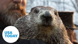 Groundhog day 2020: will phil see his shadow? punxsutawney to predict an extended winter or early spring on the 134th annual groundhog's day.related...