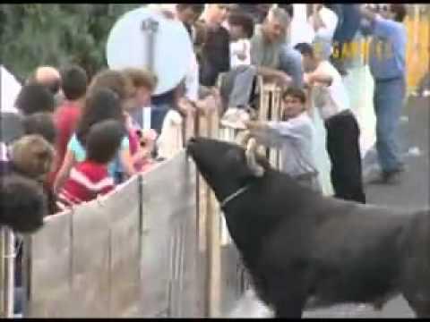 Lễ hội Bò tót ở Tây Ban Nha