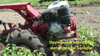 Окучиваем картофель мотоблоком Беларус