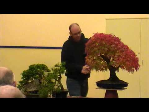NIBS Peter Warren Tree Critique Part 4