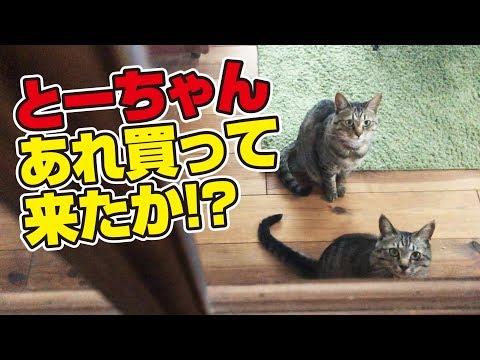 プレミアムフライデーは猫さんにとってもプレミアムな日!
