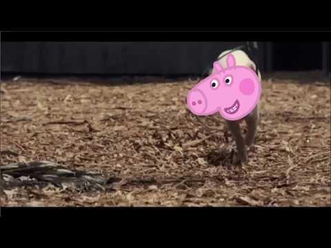 Dinosaur grrr