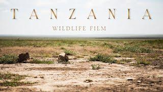 TANZANIA // 4K WILDLIFE FILM