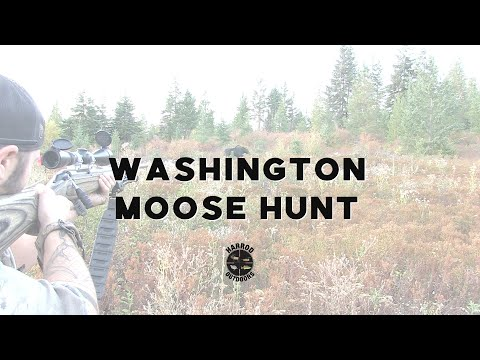 Washington Moose Hunt