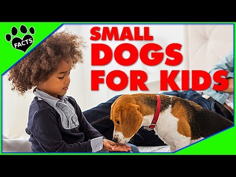 Small Dog Breeds for Kids Children