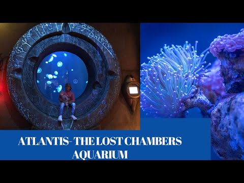 ATLANTIS DUBAI – The Lost Chamber Aquarium#AishaZia'sWorld#Vlog-1