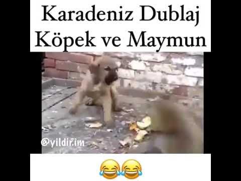 Karadeniz Dublaj Köpek Ve Maymun