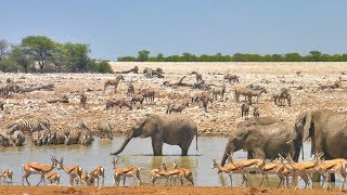 A day at the Okaukuejo waterhole (Etosha, Namibia)