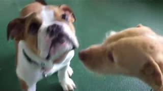 Daycare Boops!