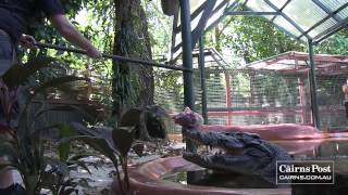 Repeat youtube video Cassius- World's Largest Crocodile in Captivity, Green Island, Australia