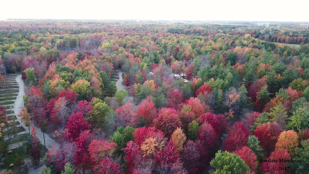 Pure Michigan Fall Colors