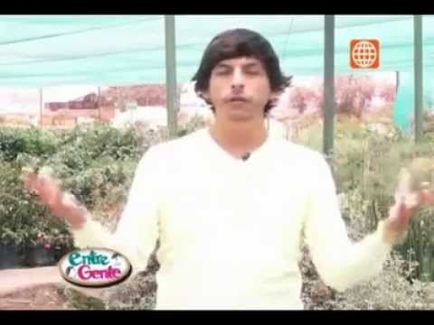 Jesus Pacheco - Cómo hacer abono en casa? - America TV
