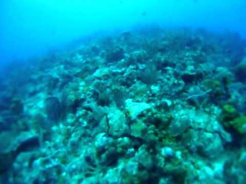 Barbados scuba 2011 with the Dive Shop
