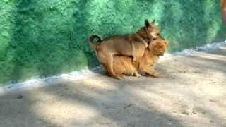 sexi dog ( oficial video HD)