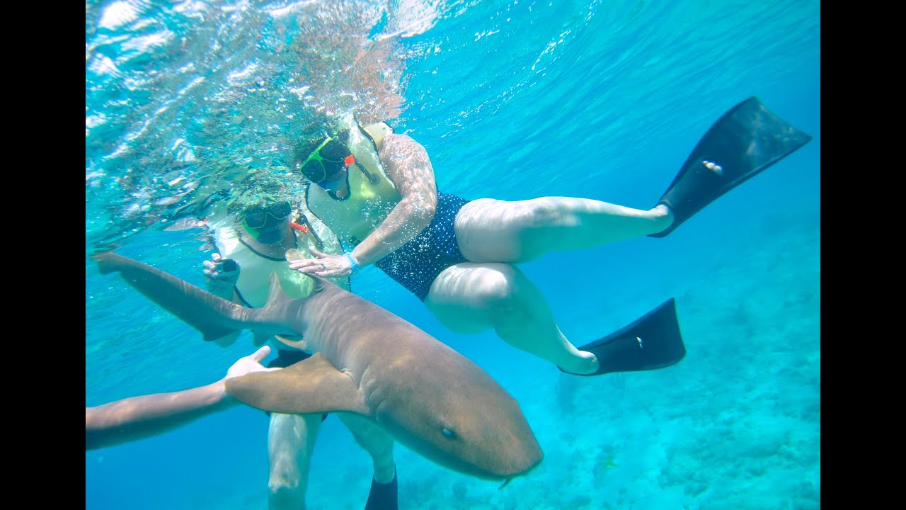 Snorkeling With Sharks In Grand Turk
