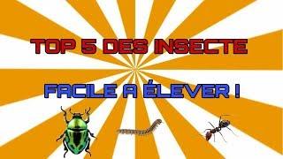 Top 5 des insectes facile a élever !