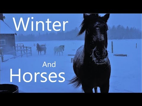 Winter Horse Feeding and Baby News!