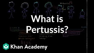 What is pertussis? | Respiratory system diseases | NCLEX-RN | Khan Academy