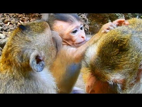 Bravo girl Maci grooming for mom Merry  Monkey Post