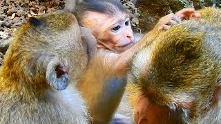 Baixar Bravo girl Maci grooming for mom Merry / Monkey Post