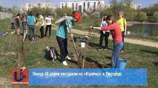 Понад 40 дерев висадили на «Кірпічці» в Ужгороді