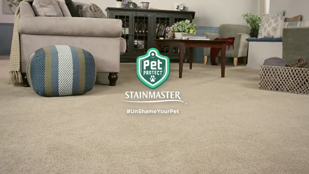 Stainmaster Pet Protect Carpet at RC Willey - YouTube