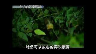 魅力台灣樂活誌-第014集 台灣最大蝙蝠台灣狐蝠蹤跡再現