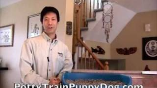 Dog House Training With Indoor Puppy Litter Box