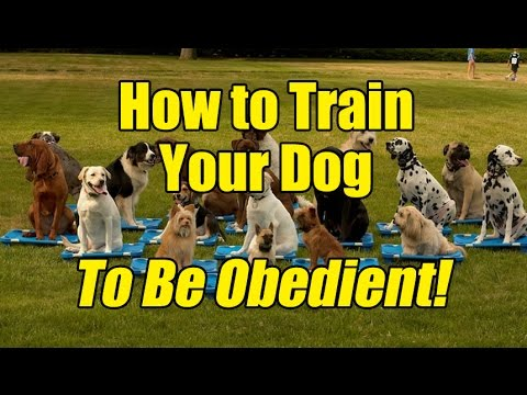 how-to-train-your-dog-to-be-obedient!
