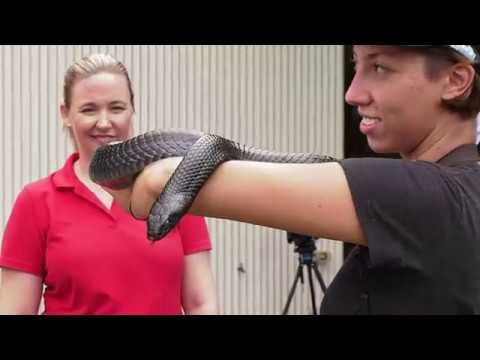 Eastern indigo snake reintroduced to northwest Florida longleaf pine forest