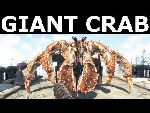 Fallout 4 Far Harbor - Find Giant Hermit Crab (Oceanarium Location)