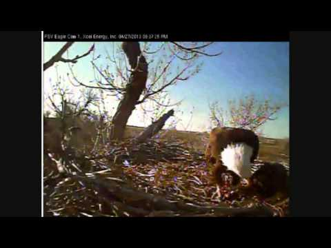 FORT ST VRAIN EAGLES  4/27/2013   PM CLIPS OF PATENTS AND SURVIVOR