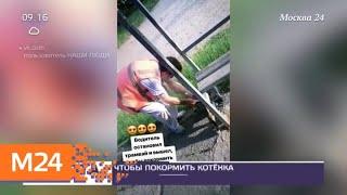 Водитель трамвая остановился, чтобы покормить котенка - Москва 24