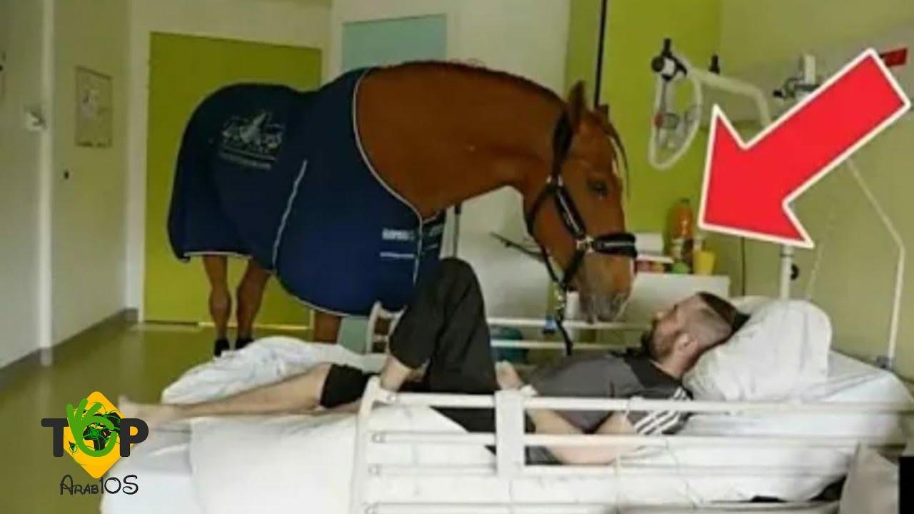 جاء الحصان إلى سيدها في المستشفى وما فعلته جعل الأطباء يبكون