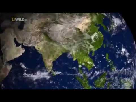 Download Asian History Documentaries - Jungle and the animals