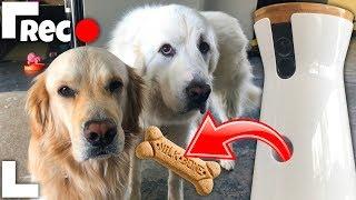 DOG SPY CAM REMOTE TREAT LAUNCHER