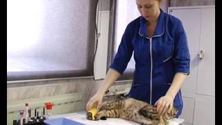Иглоукалывание, акупунктура для животных
