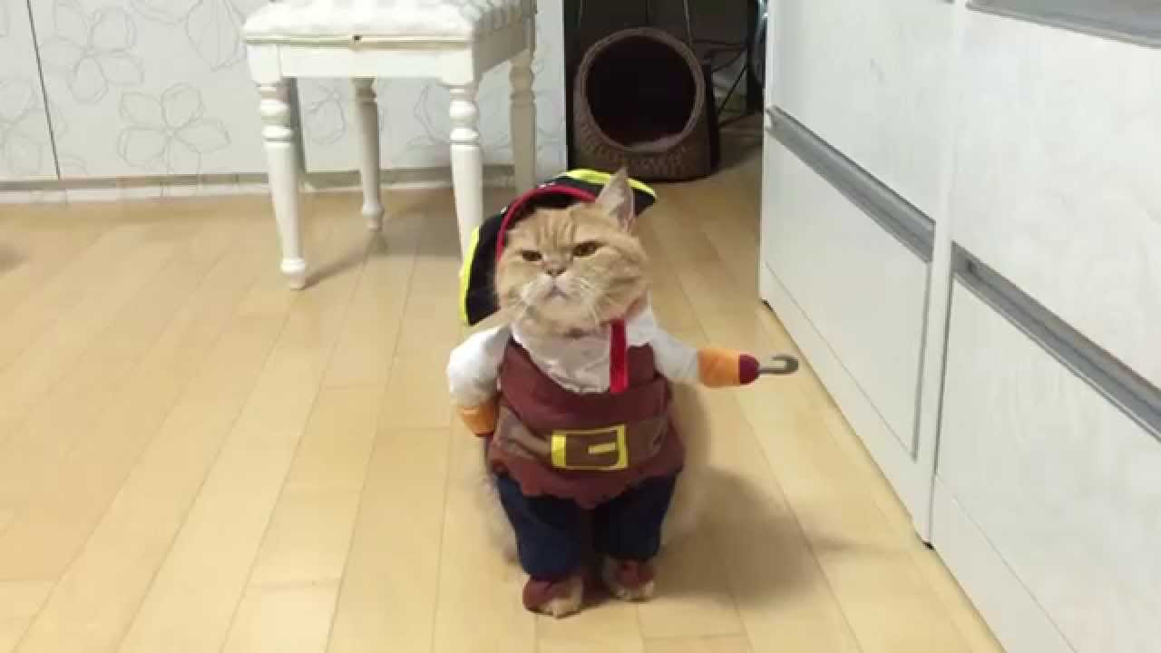 677537ca35e Pirate cat! Pirates of the Caribbean costume (name is Zeon) - YouTube