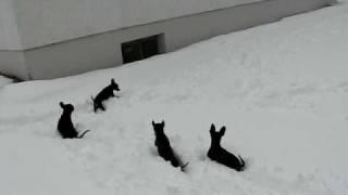Prager Rattler im Schnee