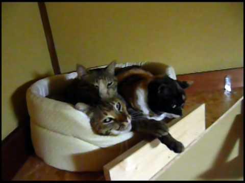 【cat】かたまって寝る猫 Good friends!