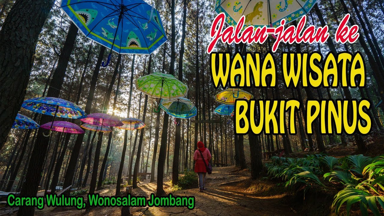 Jalan-jalan ke Wana Wisata Bukit Pinus Carang Wulung Wonosalam Jombang