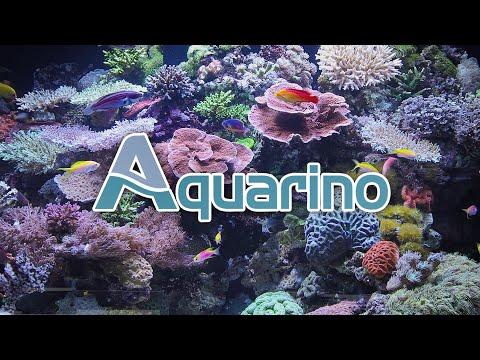 Aquarino | Tech Talk |  Automação em Aquários Plantados com Cláudio Torrado